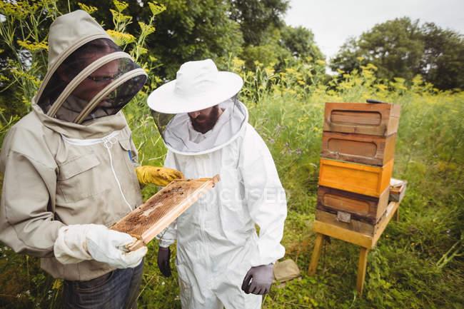 Минсельхоз поддержал создание пчеловодческих кооперативов во всех регионах России